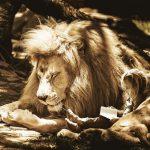ライオンは寝ている